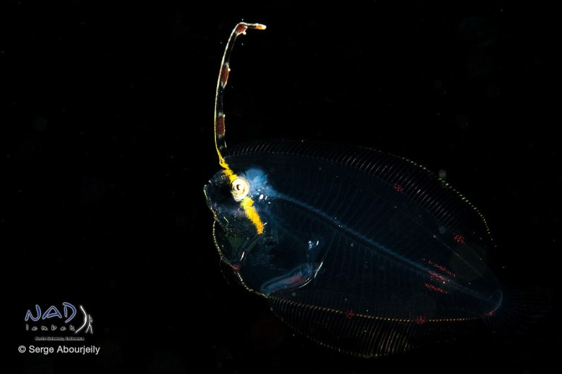 On a Black Water Night Dive