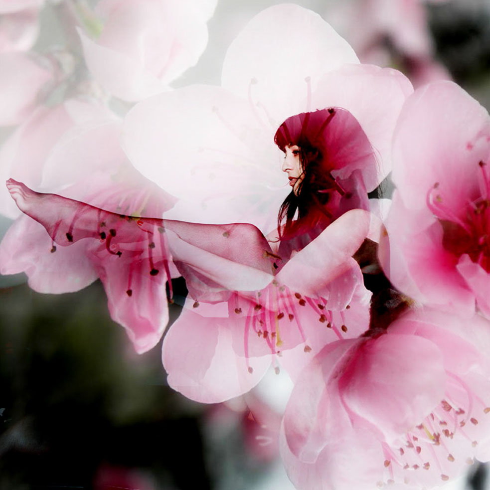 cherry blossom nadia rabhi -15