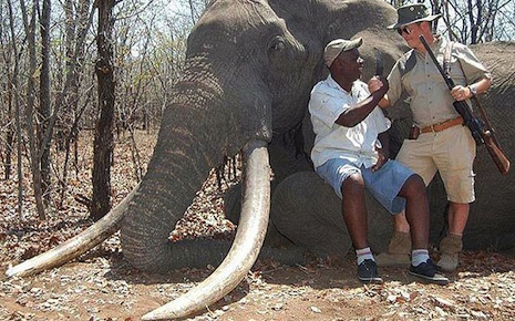 Giant elephant killed