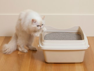 6 Things to Consider When Choosing a Cat Litter Box 1