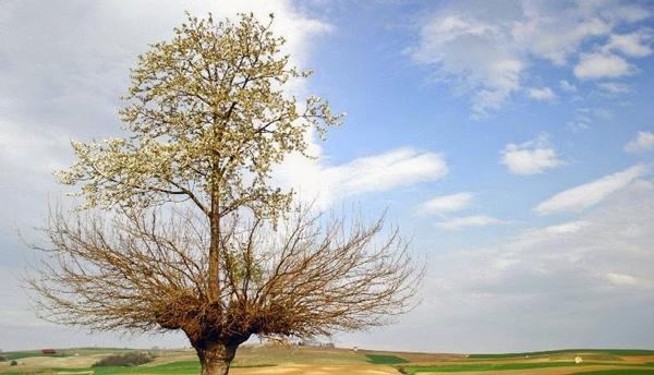 δέντρο φύτρωσε πάνω σε ένα άλλο