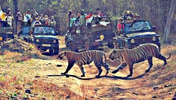 Jungle Safari Around Nagpur