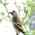 Views I saw in April/May 2014 In Singapore - A Birdie visited our home