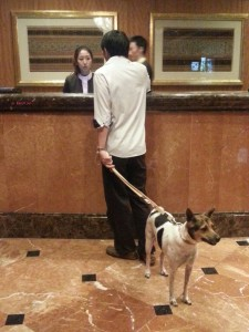 Pet Staycation at The Regent - Checking In with Cookies