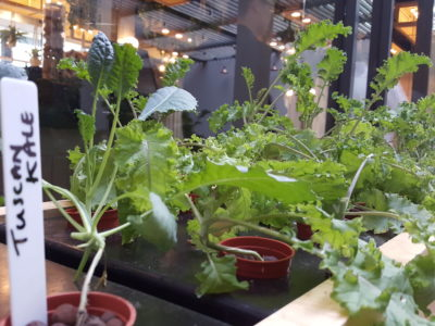 Vineyard At HortPark, Re-opened With Lushy Theme And Localised Menu - Edible Garden within the restaurant