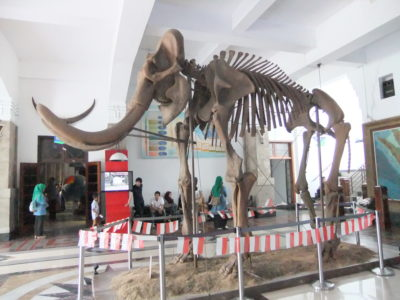 Must Visit Bandung Attractions NAHMJ Recommends - Museum Geologi Fossil