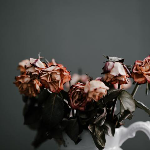 Beauty in decay by Annie Spratt
