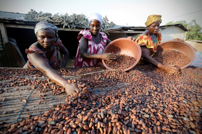Nigeria cocoa output to see 20% drop for 2020/21 amid virus, dry weather surge