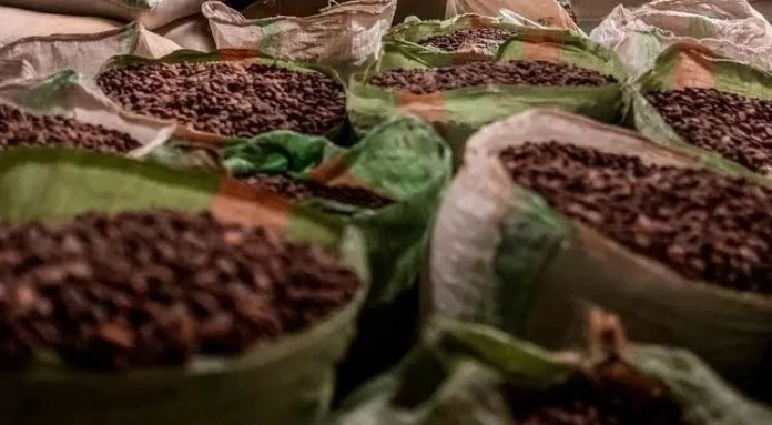 As Nigeria's Agricultural Export Plunge New Rule Leaves Tonnes of Cocoa Beans Trapped at Nigerian Ports