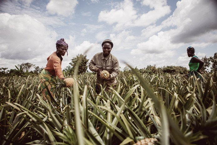 NDIC urges farmers to embrace insurance policies to enhance their produce