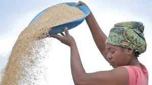 Nigeria to halt dollar supply for sugar, wheat imports -central bank