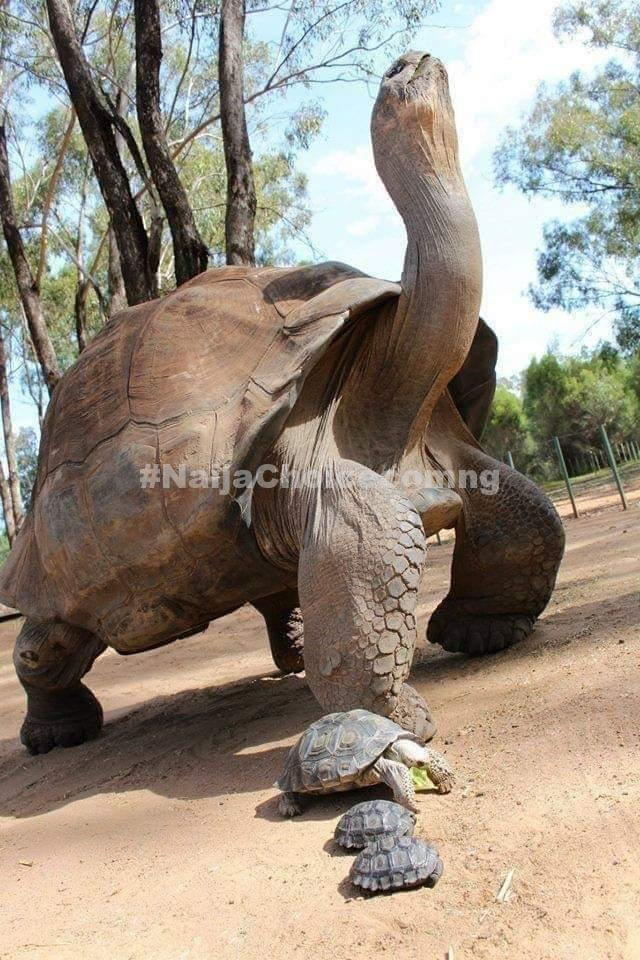 Ogbomoso Monarch Loses 344Years Old Tortoise