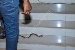 Snake That Came To Attack RCCG Pastor In Lagos Dies  As Pastor Preaches (Photos) at 8:00pm Court To El-Rufai: You Can't Sto