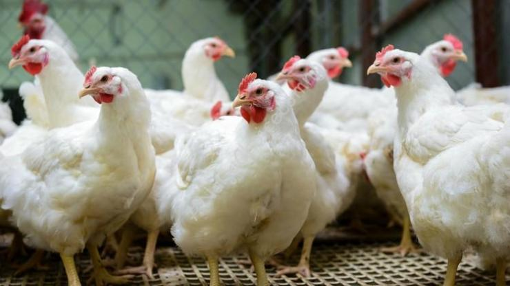Man Faces  One Year Imprisonment For Stealing Chicken