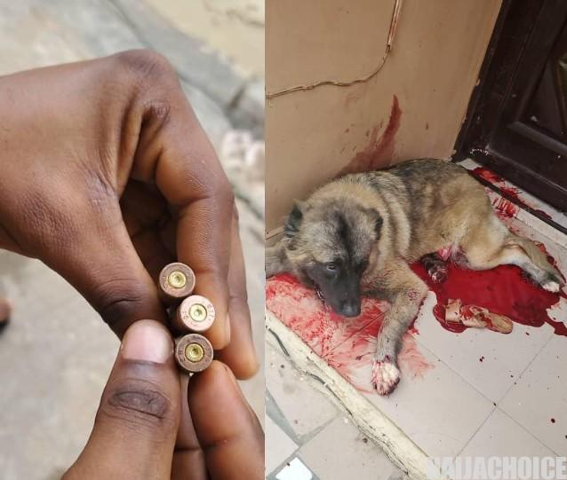 Policemen Shot A Dog That Prevented Them  From Entering A Compound (Graphic Pics)