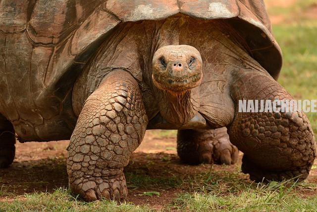 12 Animals That Can Stay Without Food For A Long Time