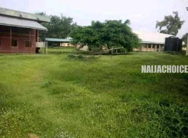 Grasses Take Over Benue State University Due  To Lockdown (Photos)