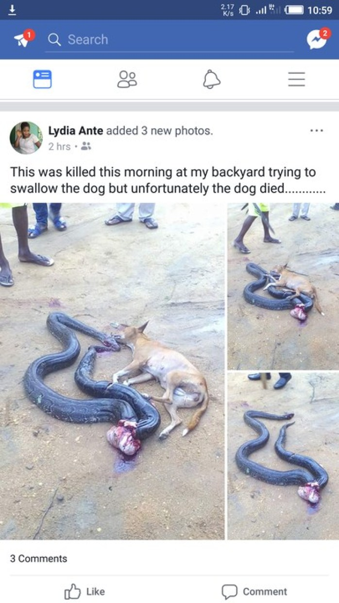 4 58 - This Big Python Tried To Swallow A Dog, You Won't Believe What Happened Next (Photos)