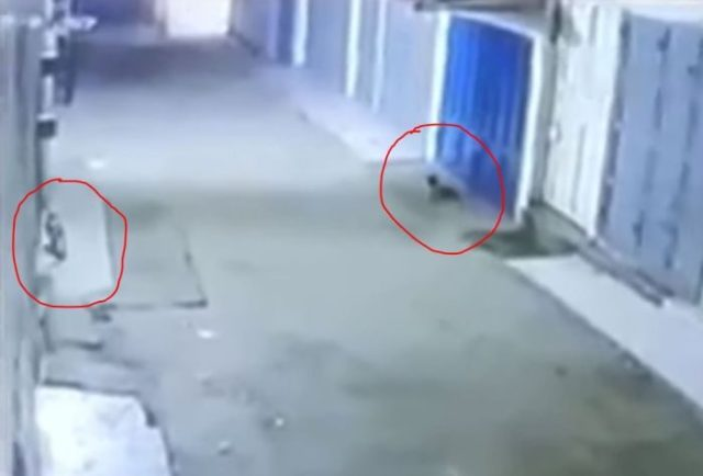 SHOCKING!! Igbo Man Shares Video Of Cats Disappearing In Front Of His Shop (Video) 1