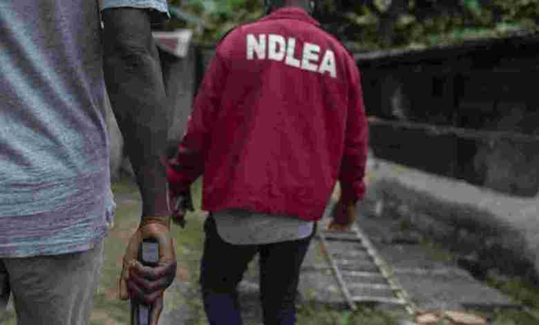 NDLEA arrests 108 suspects with 121.65kg cannabis, other narcotics - Naija News 247