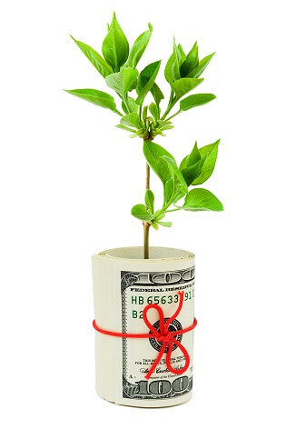 Roll of money and plant