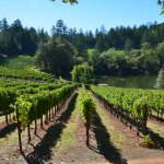 Most Beautiful Wineries of Napa Valley: Sherwin Family Vineyards