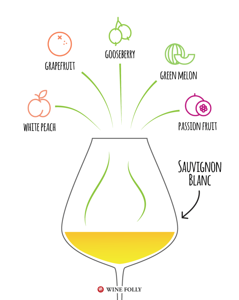Sauvignon Blanc Tasting Notes - Illustration by Wine Folly