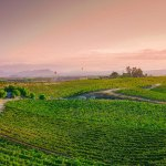 It's Time to Start Treating Southern California as a Serious Wine Destination