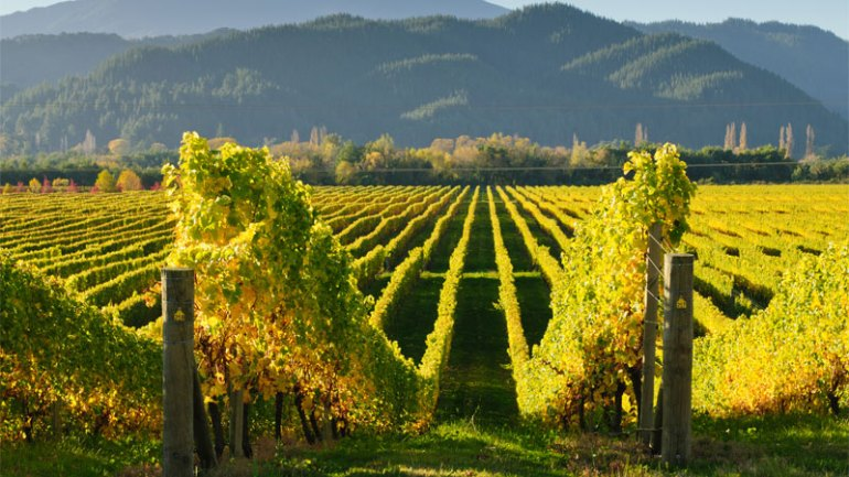New Zealand is one of the best wine vacation destinations!