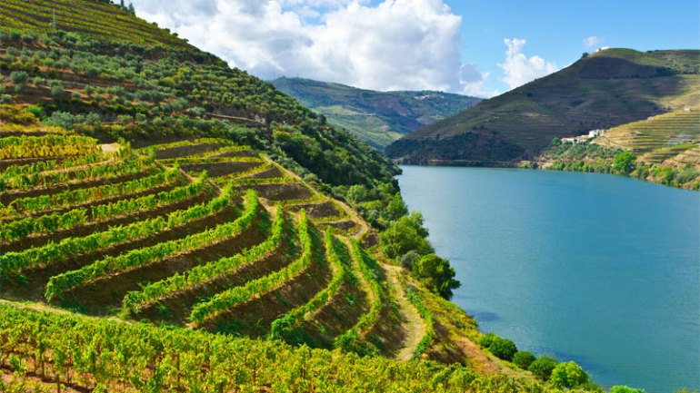 Portugal is one of the best wine vacation destinations!