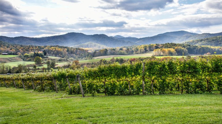 Virginia is one of the best wine vacation destinations!