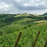 Italian Police Seize 1 Million Liters of Counterfeit Wine