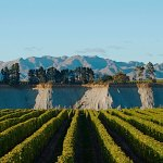 'Vintage' Takes Wine Lovers Behind the Scenes of New Zealand's Legendary Villa Maria