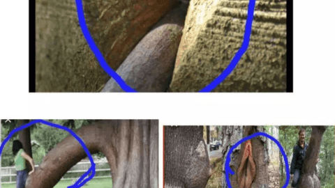 This is unbelievable: Hillarious trees you probably don't know truly exist that got people talking.