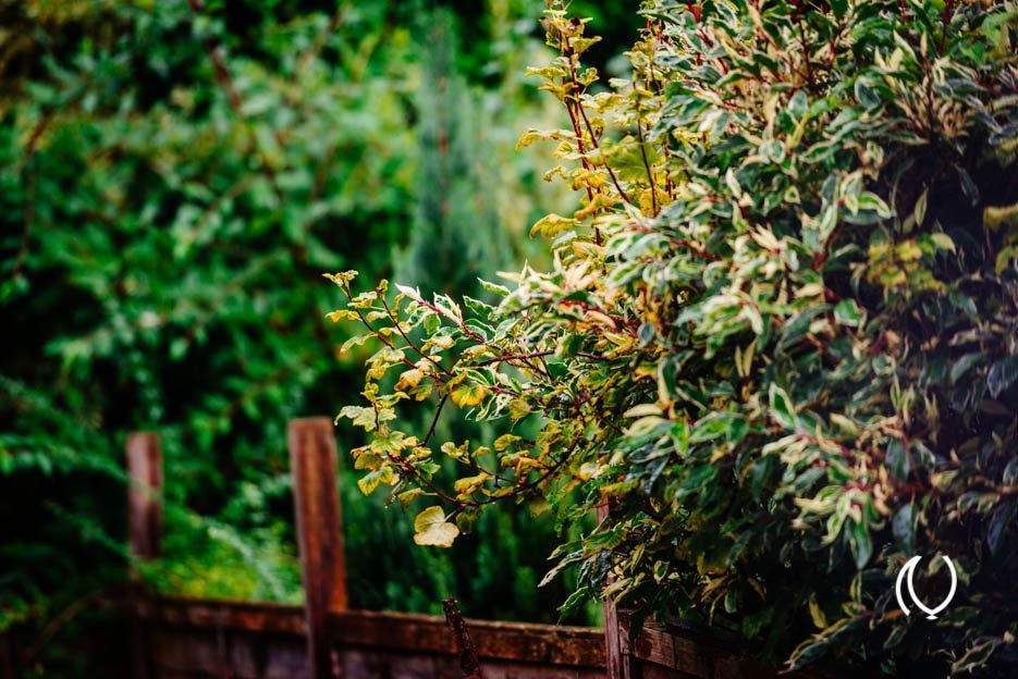 EyesForLondon-Luxury-Lifestyle-Naina.co-Raconteuse-Visuelle-StoryTeller-UK-Photographer-Day-07-September-2013