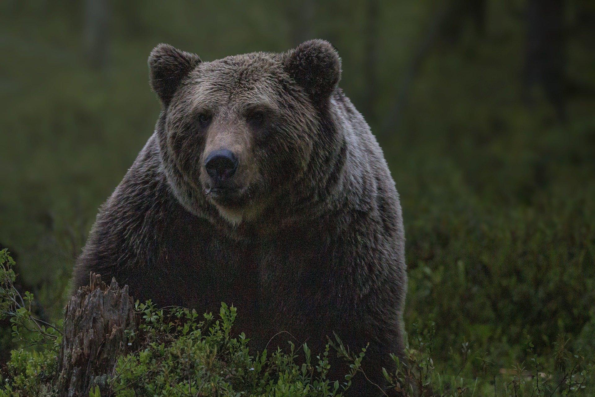 ग्रामीण के पीछे दौड़ा भालू, भागकर जान बचाई