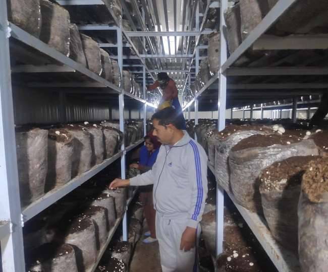 कोरोना काल में लगाया मशरूम का प्लांट, रोजना तीन से पांच क्विंटल उत्पादन