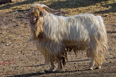 Most Nigerian Women Wear Goat Hair Thinking Its Expensive