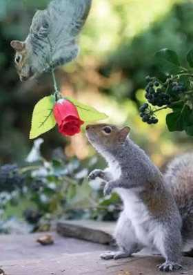 See Adorable Photos Of Squirrels In Lovelol Romance