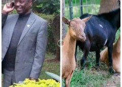 Meru County Goat Breeders Scandal