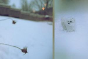 Frozen Toby