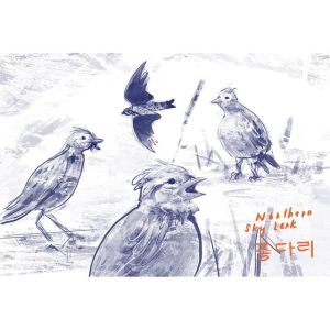 Value Study: Northern Sky Lark 종다리