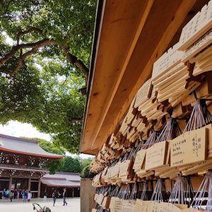 Photo: Meiji Shrine in Yoyogi Park, Tokyo