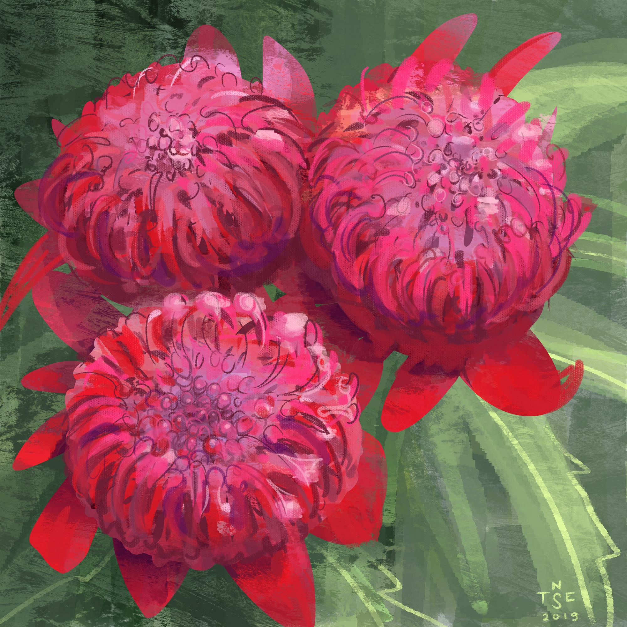 Painting: Waratah Flower + Timelapse Video