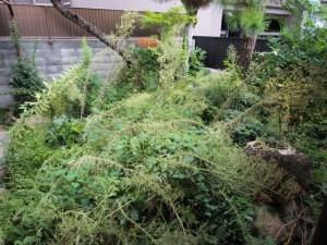 雑草の種類も増えて、大変な状態に。