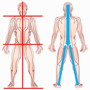 バランス療法の人体図