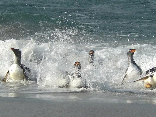 happy_penguins