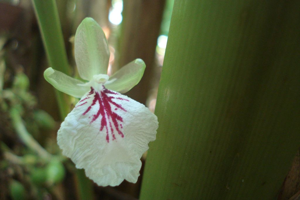 """""""Flower of cardamom"""" by Reji Jacob"""