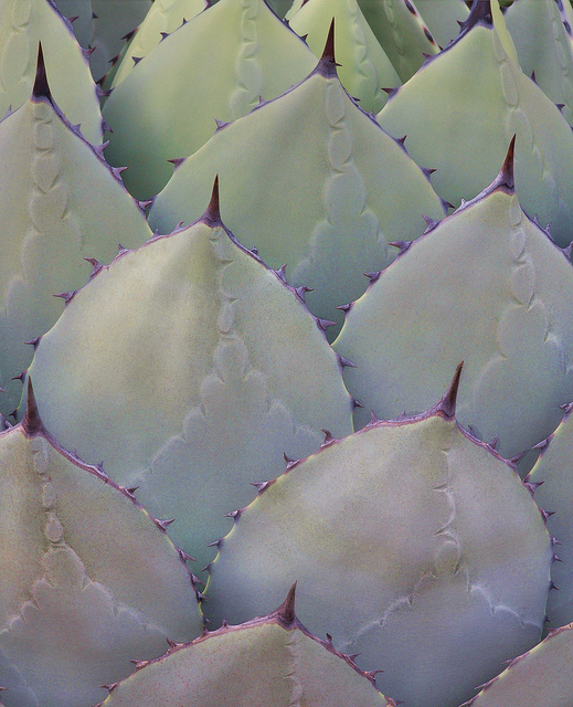 Warning: These Pseudo Health Food Might Actually be Harming You,  Part II: Agave Syrup