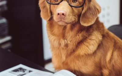 6 Books for Dog Lovers You Won't Be Able To Put Down